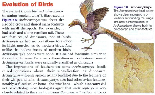 biology paper on evolution of birds In this paper, i present a comparative perspective on the biology and evolution of music of bird evolution finally, functionally.