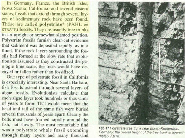 petrified trees in rock layers dating