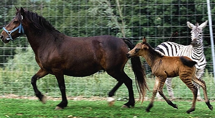 tests and demonstrations in horse breeding horses have remained horses